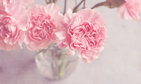 「花風水」を実践!部屋にピンクの花を飾って恋愛運をアップしてみよう♡